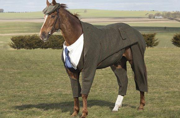 Британка создала первый в мире твидовый костюм для коня