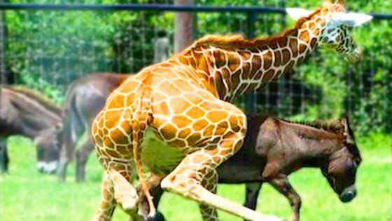 Узнай все о самых необычных повадках животных
