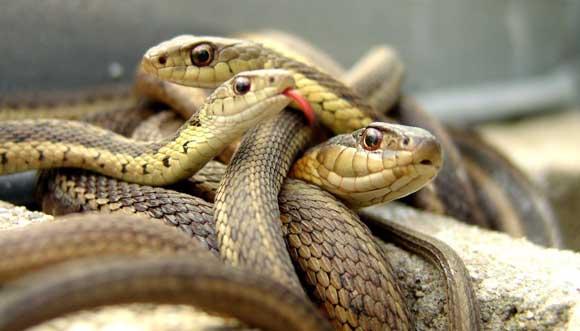 Дагестанка перебила десятки змей, которые поселились на ее огороде