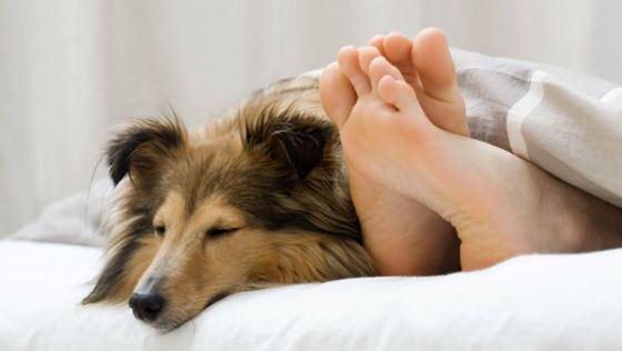 Домашние питомцы помогают уснуть