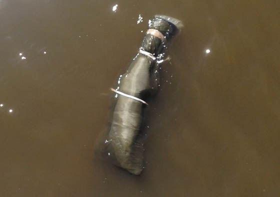В районе Лужнецкой набережной обнаружено тело мужчины в спальном мешке.