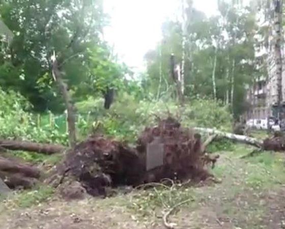 Ураганом повалило сотни деревьев