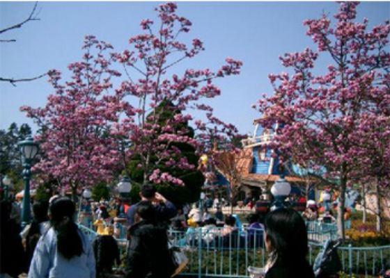 Жители Токио проводят в парках выходные во время цветения сакуры
