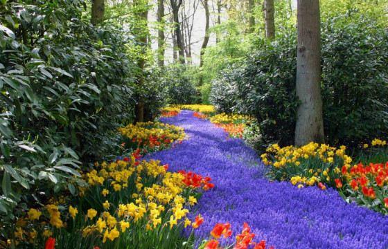 Фото красивых цветов с надписью