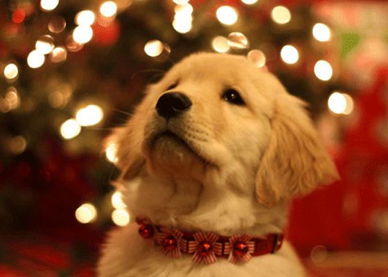 Красивый ошейник - достойный подарок  любимому псу