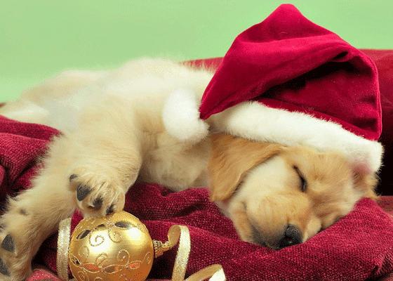 После новогодних впечатлений можно и поспать