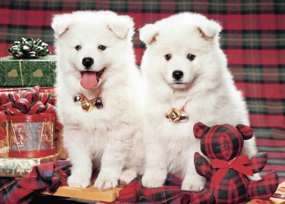 Два очаровательных малыша наверняка получат подарки