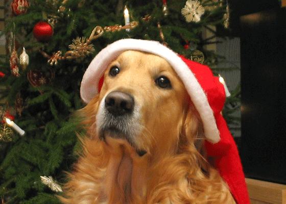 Собаки умножат вашу радость