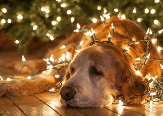 Когда праздники затягиваются, бывает грустно