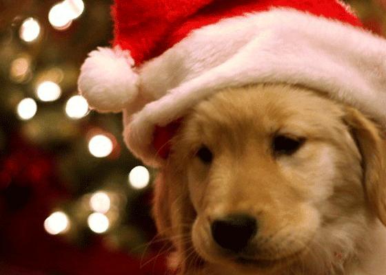 Новогодние чудеса только начинаются