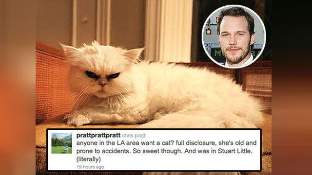 "Chris Pratt's cat played in ""Stuart Little"""