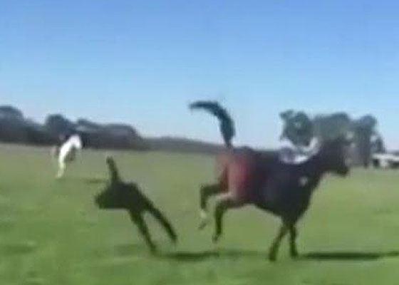Лошадь лягнула наездницу копытами