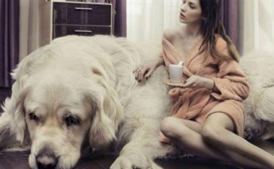 Самая дорогая собака и самая большая кошка в мире 32 фото