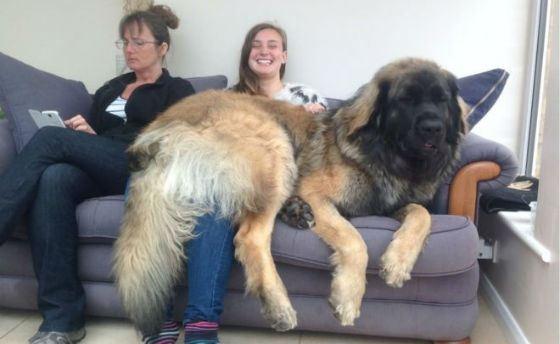 породы собак самые большие фото