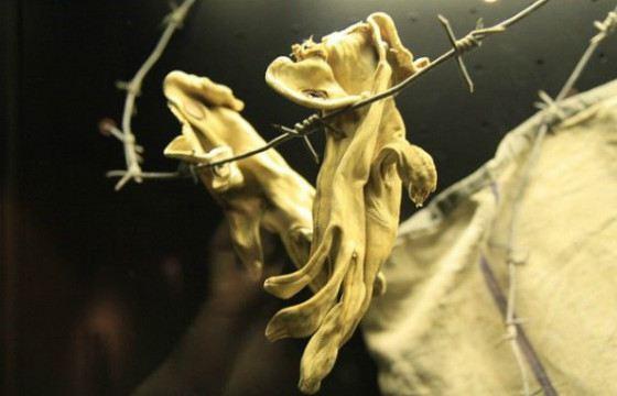 Перчатки из человеческой кожи. Бухенвальд. 1943 год