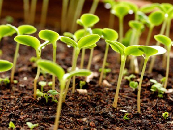 Сегодня выращивать растения из семян помогает интернет