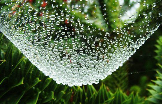 Капли росы на паутине- невероятное зрелище