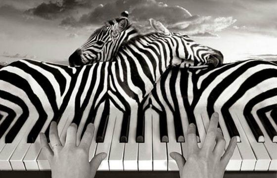 Полоски зебр приглянулись сюрреалисту Томасу Барби