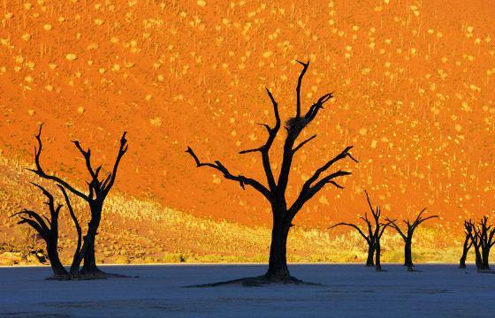 Пейзажи пустыни Намиб кажутся нарисованными