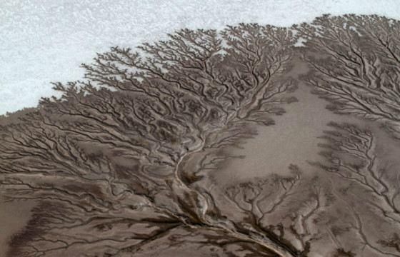 Водные «деревья» могут быть причудливой формы