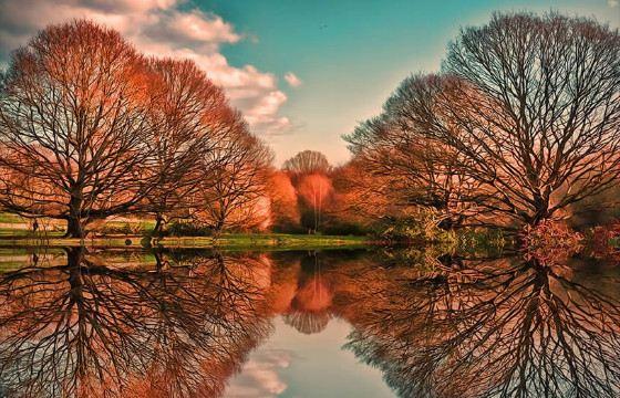 Природные чудеса можно встретить даже в ближайшем парке