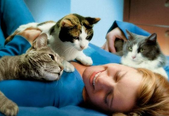 Феномен: кошки могут облегчать боль