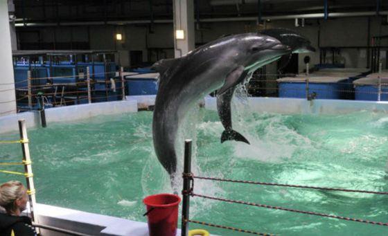 В Приморском океанариуме погибли два дельфина
