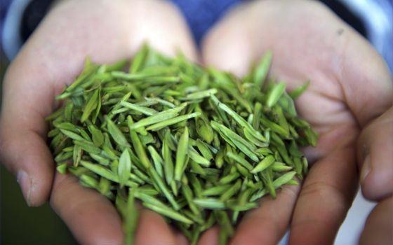 Panda Dung – чай дорогой и экстравагантный