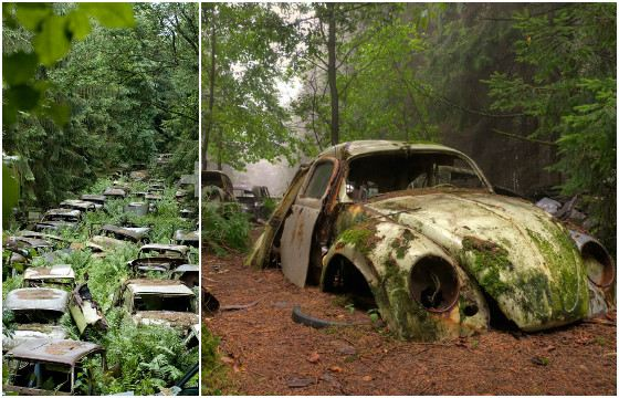 На лесном кладбище около 1000 автомобилей