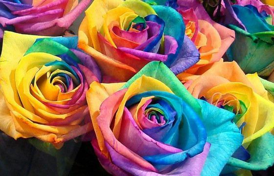Разноцветные розы созданы не селекционерами, а химиками