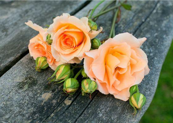 Роза - один из самых красивых цветов