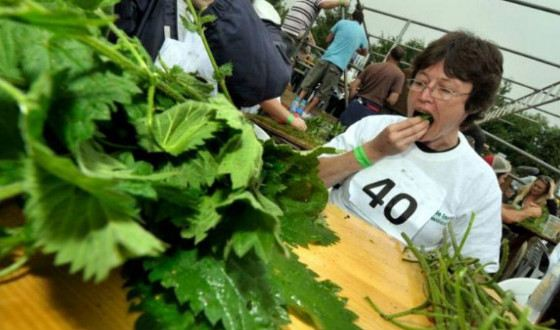 Участникам выдаются веточки крапивы длиной 60 см