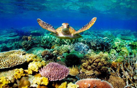 Морские глубины хранят свои тайны и сокровища
