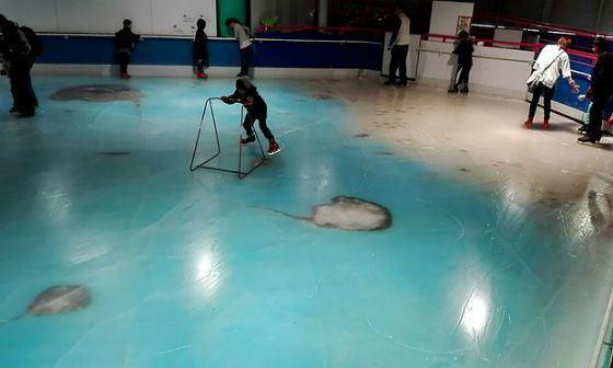 Подо льдом – настоящие скаты