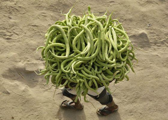 Индийский фермер несёт огурцы на рынок