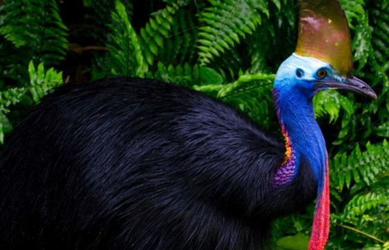 самые редкие виды животных