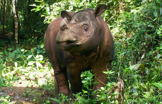На чёрном рынке стоимость 1 килограмма рогов носорога может достигать $30 тысяч