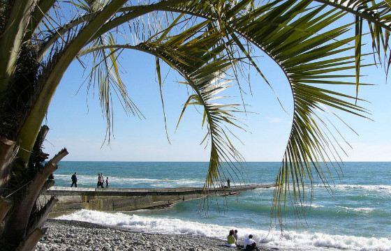Сочи - единственный город России, где растут пальмы