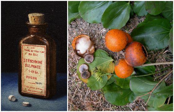 Стрихнин - алкалоид, выделенный из рвотных орешков — семян чилибухи