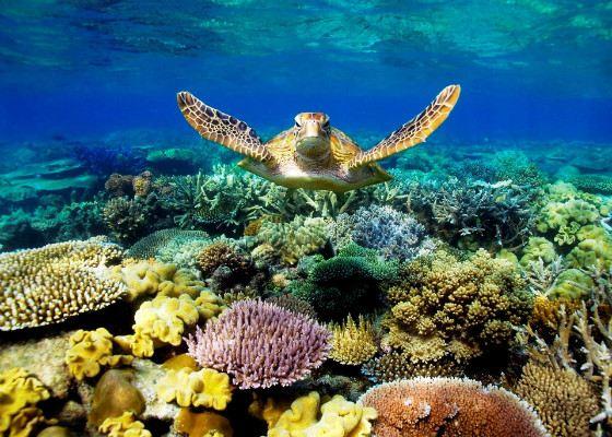 Большой Барьерный риф - объекта Всемирного наследия ЮНЕСКО