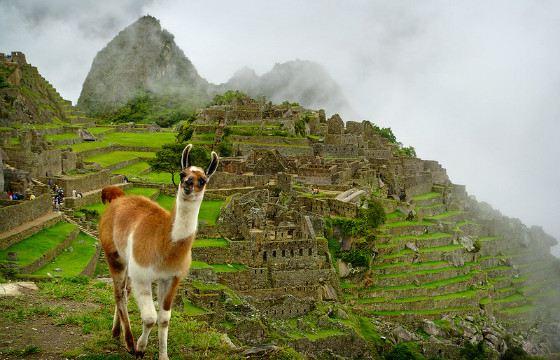The Incans were excellent builders