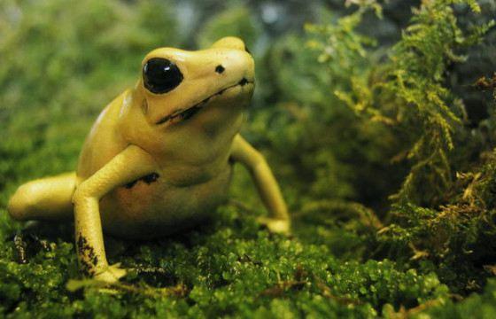 Для ядовитых лягушек в Колумбии открыт первый в мире заповедник