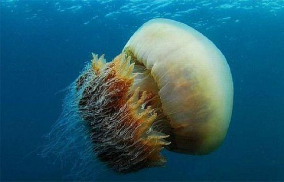 Ожог медузы может быть смертелен