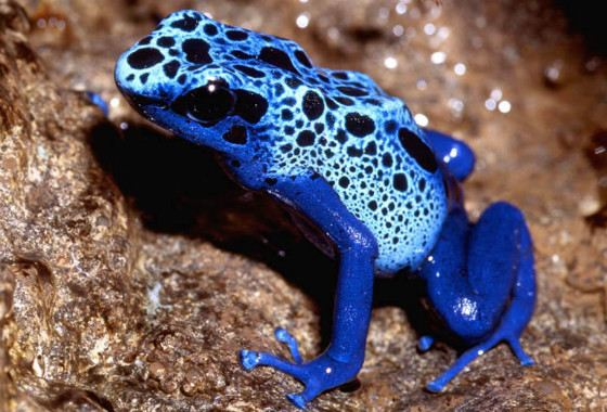 The bright and beautiful tree frog is deadly