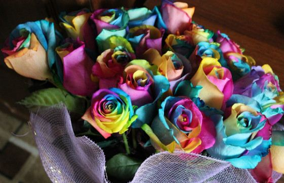 Радужные розы быстро вянут